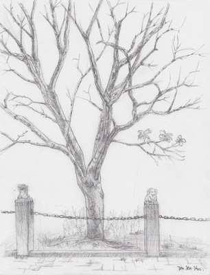树木写生素描图片